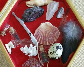 Miniture NATURE Collection ... 16 pieces of natures treasures. .. magicke, curio, ritual, collectable