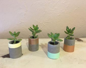 Mini Concrete Planters