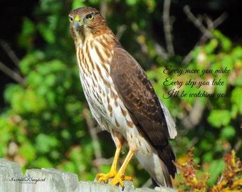 Cooper's Hawk - Every Breath You Take