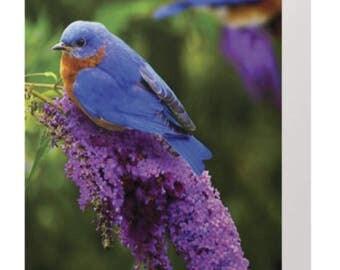 blue bird-birthday card-birthday card-purple-floral-bird on flower-exquisite-get well-positive inspiration-chickadee