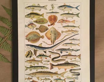 Board naturalist, history & natural science - fish - Larousse