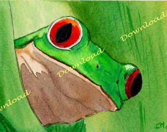 Download-frog-Animals-Made in France