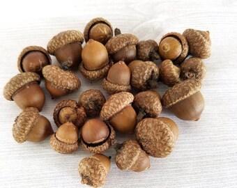SMALL Natural Acorns Real Acorns Rustic Decor Thanksgiving Craft Holiday Centerpiece SMALL Acorn MINI Acorn Fall Decor 25 or 50 acorns