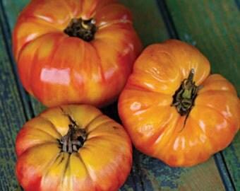 3 - Big Rainbow Heirloom Tomato Plants