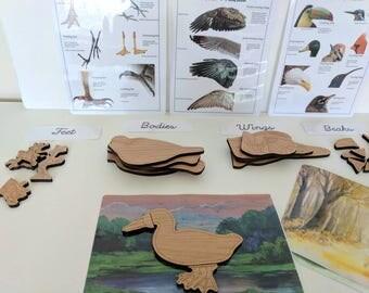 Build a bird wooden puzzle - montessori toys - Waldorf - Reggio inspired toys - homeschooling - children's toys