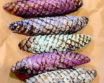 Spring mix spruce pine cones