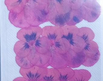 Pansies:Pink Flowers;Pressed Flowers;Dried Flowers;Pressed Pansies;Preserved Flowers;Real Pansies;Flower Embellishments Handmade Wedding