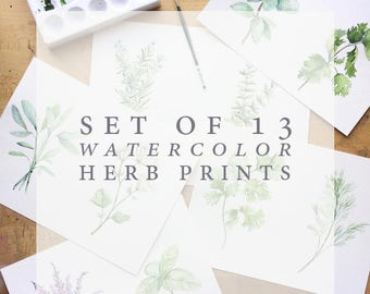 Set of 13 Herb Watercolor Prints | Watercolor Herb Print Set | Watercolor Herb Painting Set | Herb Kitchen Decor | Herb Collection