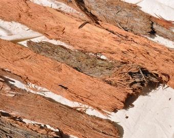 Gumtree etsy stringybark gumtree bark eucalyptus bark rustic bark australian bark stringybark rustic junglespirit Image collections