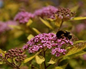 Macro Shot of Flowers & Bee