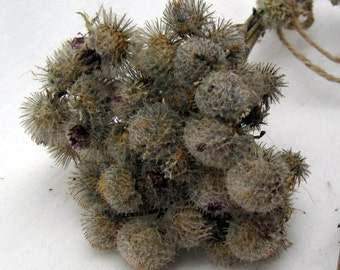 Dried plants floral arrangement real dried flowers burdocks wildflowers thistle greenery natural materials bulk bunch