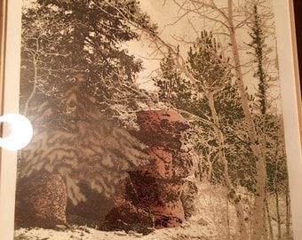 "Vintage Etching by Paula Crane ""Spruce Tree Pt"" 198/300"