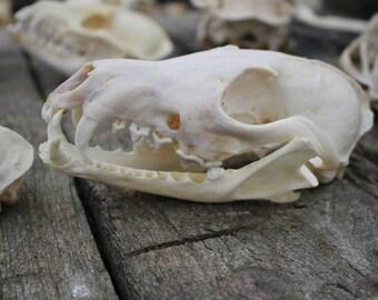 fox skull with jaw and teeth taxidermy design animal bone creepy vintage carving decoration gift present girlfriend boyfriend
