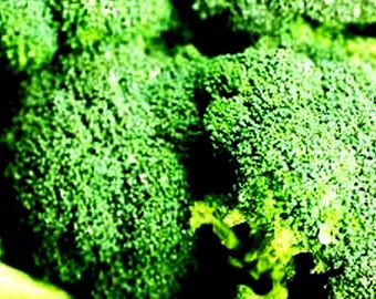 Organic Broccoli Seed Oil UNREFINED Cold Pressed
