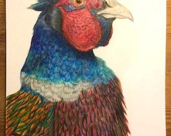 Pheasant Original Coloured Pencil Drawing