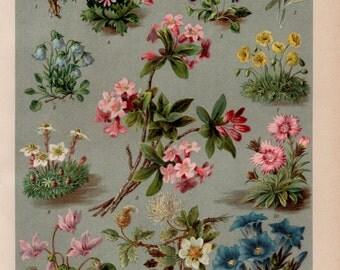 Antique Flower Lithograph, Flower, Flowers, Flower Print, Flower Lithograph, Flower Illustration, Flower Wall Art, Flower Prints