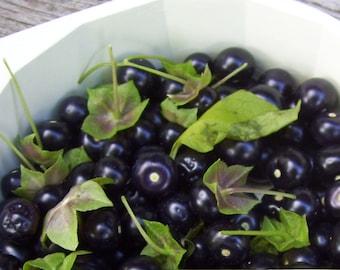 Jaltomato Berry 10 Seeds- Novelty, taste of grape&tomato, easy to grow, ORGANIC