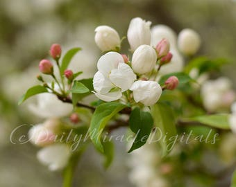"Spring Blossoms - INSTANT DOWNLOAD 5"" x 7"" Stock photos"