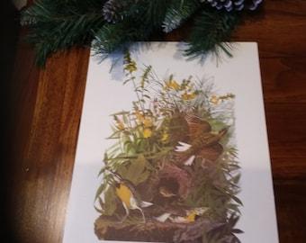 Audubon print of Meadowlark