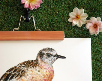 New Zealand native bird Tūturiwhatu (or dotterel) illustrated Large print from original watercolor and ink painting artwork, Wild wall art