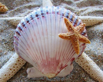 Large Scallop Shell With Small Sugar Starfish- Mermaid Hair, Wedding Accessories