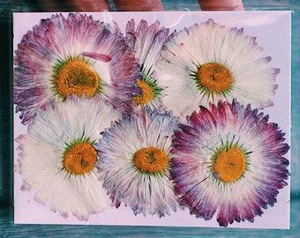 Large Mixed Purple Pressed Flowers Fleabane Pack of 6 | Dried Flowers | Flatten Flowers | Real Flowers