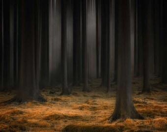 MYSTIC FOREST wallpaper, dark forest wallpaper, nature wall mural, forest wallpaper, mystic forest, forest fog wall mural, forest wallpaper