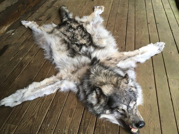 Timber Wolf Rug Taxidermy Log Cabin Decor Fur Pelt Hide Man