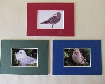 Orkney birds: set of 3 mount-cards