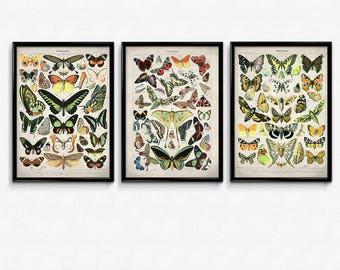Butterfly Meadow Vintage Print Set of 3 - Butterflies Poster - Butterfly Art - Home Decor - Home Art - Kitchen - Kitchen Art - Larousse