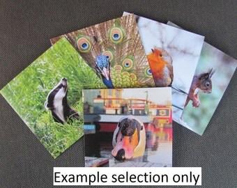 Set of 5 Wildlife Photography Cards
