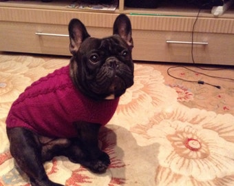 Sweater for French Bulldog