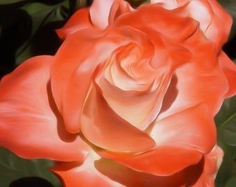 Digitally Enhanced 8x10 Photo Print - Peach Rose