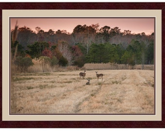 Whitetail Sunset Meeting