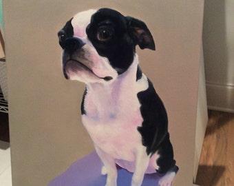 Rocco - oil painting boston bull terrier portrait