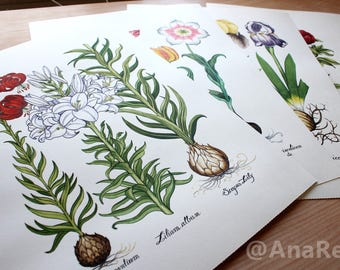 4- Botanical flowers watercolor, original painting, drawing botanicals Watercolorist, painted and hand drawn