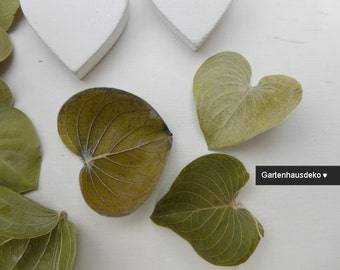 Sweetheart * Caracao leaves * nature
