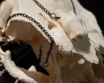 Goat Tooth Talisman/ Charm /Necklace