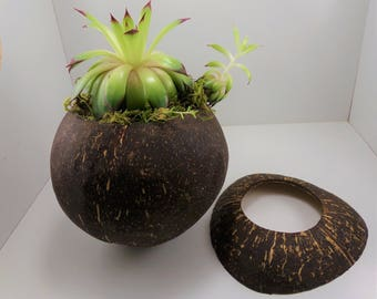 Coconut Planter with Stand