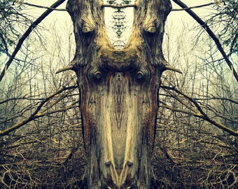Fantasy surreal tree art photography, mysterious, art print, woodland, nature print, unique, magical, fairy-tale photography, Tolkien, dark
