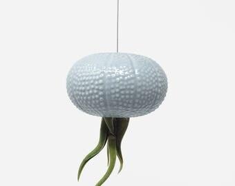 Hanging Blue Jellyfish Air Plant Sea Urchin
