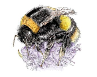 Bee on flower limited edition print. Ink pen and mixed media (2017).