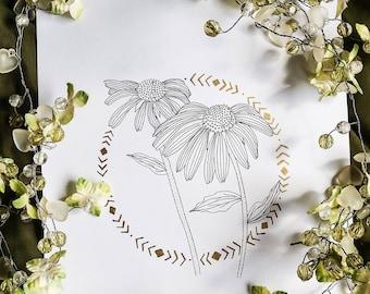 Echinacea Illustration