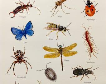 Poster of insekts, sea animals and shells, reptiles