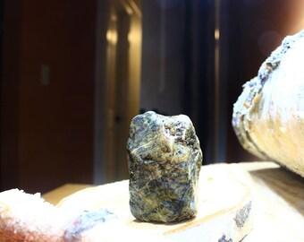 Alaskan Petrified Glacial-Till Wood, Chugach Diamictite Cobble