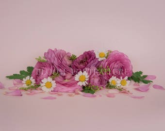 Floral Digital Backdrop for Photography - Pink Ranunculus