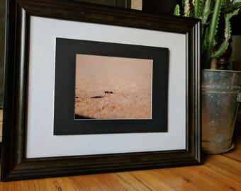 Ant Photograph, Nature Photography, 8x10 (does not include frame)