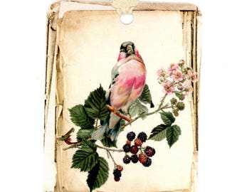 Bird and Berries Gift Tags , Vintage Style , Vintage Bird , Blackberries , Stacked Paper , Rustic Style, French Farmhouse , Bluebird Lane
