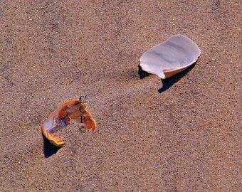Beach Photography, Sea Shells, Coastal Photo, Sand And Shells, Beach Decor, Fine Art Print, Nature Photo, Landscape Photo, Wall Decor