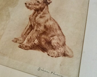 Diana Thorne Vintage Airedale Terrier Puppy Dog Framed Original Etching in Picture Frame